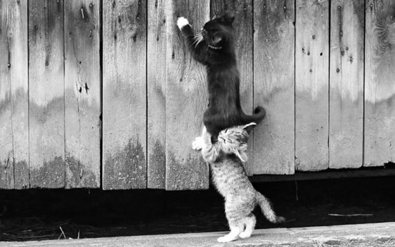 two cats collaborate